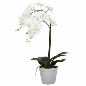 Orchidée artificielle blanche 65 cm