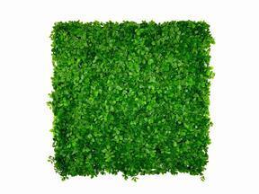 Panneau de feuilles artificielles Fikus Microcarpa - 50x50 cm
