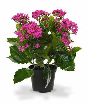 Plante artificielle Kalanchoa violet 30 cm