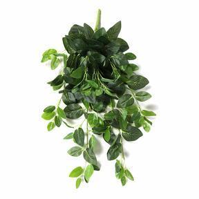 Vrille artificielle Fitónia vert 80 cm